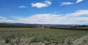 A Topographical Survey for a Rural Commercial Property by Realserve at Punt Roads Winery