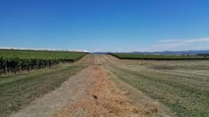 A Topographical Survey for a Rural Commercial Property by Realserve at Punt Roads Winery dirt road